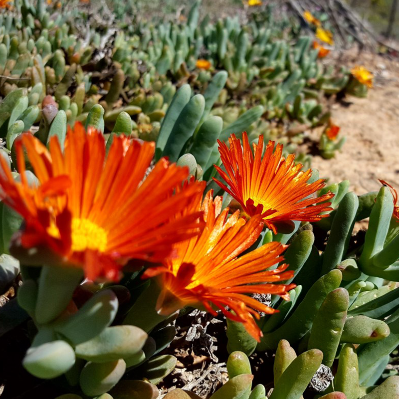 Namaqua Flower Camps